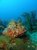 Skorpion-Fische Lizenzfreies Stockbild