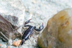 Skorpion kriecht auf den Sandabschlu? oben lizenzfreies stockfoto