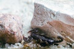 Skorpion kriecht auf den Sandabschlu? oben lizenzfreie stockbilder