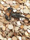 Skorpion mit Geld Stockfotografie