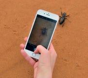 Skorpion na mężczyzna ` s palmie Zdjęcie Stock