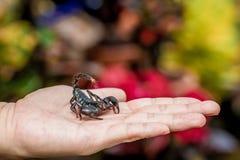 Skorpion na ręce zdjęcia royalty free