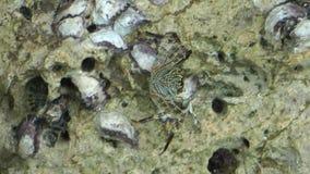 Skorpion podwodny zdjęcie wideo