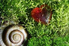 Skorupa ślimaczek i czerwony dekoracyjny szklany kierowy lying on the beach na mech Obrazy Stock