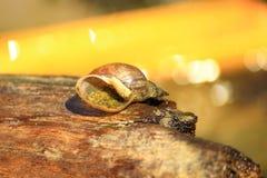 Skorupa ślimaczek na beli Zdjęcie Royalty Free