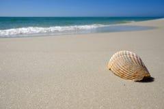 Skorupa na piaskowatej plaży Fotografia Stock