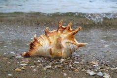 Skorupa na plaży Obrazy Stock