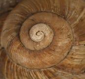 skorupa ogrodowy ślimaczek Fotografia Royalty Free