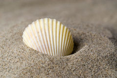 skorupa piasku zdjęcie stock
