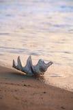skorupa plażowa Zdjęcie Stock