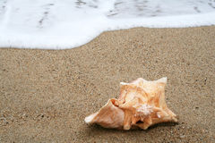 skorupa plażowa Obrazy Stock