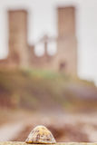 Skorupa przy Reculver Zdjęcie Stock