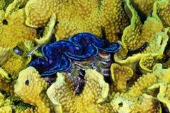 Skorupa w koralu Fotografia Stock