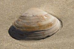 Skorupa w piasku Zdjęcie Royalty Free