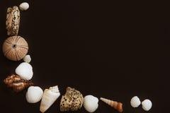 Skorupy i denni czesacy na ciemnym tle kłamają w postaci kąta, mnóstwo przestrzeni dla teksta lub innej informaci, Fotografia Royalty Free