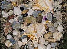 Skorupy i kamienie Obrazy Stock