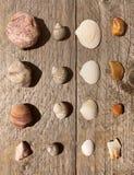Skorupy i kamienie Zdjęcie Stock
