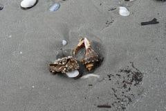 Skorupy i morscy ślimaczki po burzy na plaży Fotografia Stock