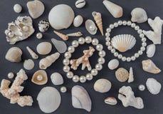 Skorupy i perły zdjęcia royalty free