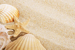 Skorupy i piasek obrazy stock