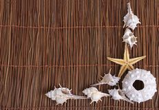 Skorupy i rozgwiazdy na piaska tle Fotografia Stock