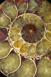 skorupy makro- spirala zdjęcia royalty free