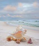 Skorupy na Białej piasek plaży zdjęcia royalty free