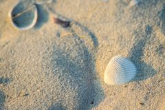 Skorupy na piaskowatym wybrzeżu fotografia royalty free