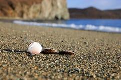 Skorupy na piasku przez morze Zdjęcia Royalty Free