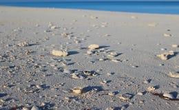 Skorupy na plaży w wyspie karaibskiej, Bahamas zdjęcia stock