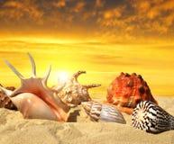 Skorupy na plaży Obraz Royalty Free