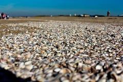 Skorupy na plaży obraz stock