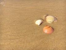 Skorupy na plaży 2 Zdjęcia Stock