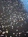 Skorupy na plaży w Nikaragua Obraz Stock