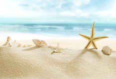 Skorupy na tropikalnej plaży Fotografia Royalty Free