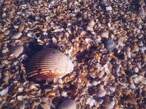 Skorupy ocean podłoga Zdjęcia Stock