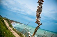 Skorupy panoramy Shabla Karya plaży Bułgaria morze Zdjęcia Stock