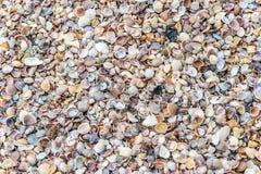 Skorupy tekstury koniec Zdjęcia Royalty Free