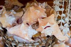Skorupy w koszu na drewnianym tle w Key West, usa zdjęcia royalty free