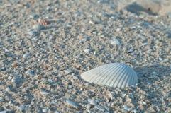 Skorupy w piasku. obrazy stock