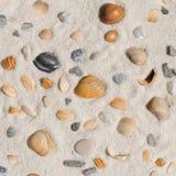 Skorupy w piasku Zdjęcie Stock