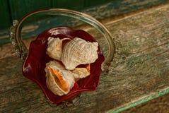 Skorupy w szklanej wazie na drewnianej desce Obrazy Royalty Free