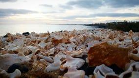 Skorupy wyrzucać na brzeg plaÅ ¼ muszla Obraz Royalty Free