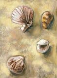 Skorupy znajdować przy plażą Obraz Royalty Free