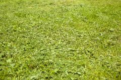 Skoszona młoda trawa na boiska tle fotografia stock