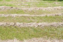 Skoszona trawa w polu Zdjęcia Stock