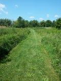 Skoszona Zielona trawa przed rzędem drzewa Obrazy Royalty Free