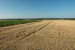 Skoszony pole ścierń, horyzont i bezchmurny niebo -, zdjęcia stock