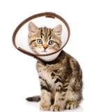 Skotsk kattunge som bär en trattkrage Isolerat på vit Arkivfoton