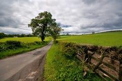 Skotsk landssida Royaltyfria Bilder